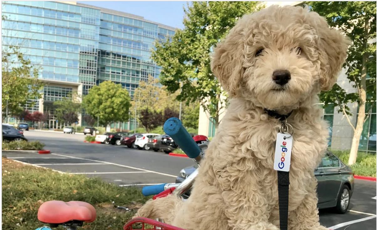 Dogs in the Google Campus