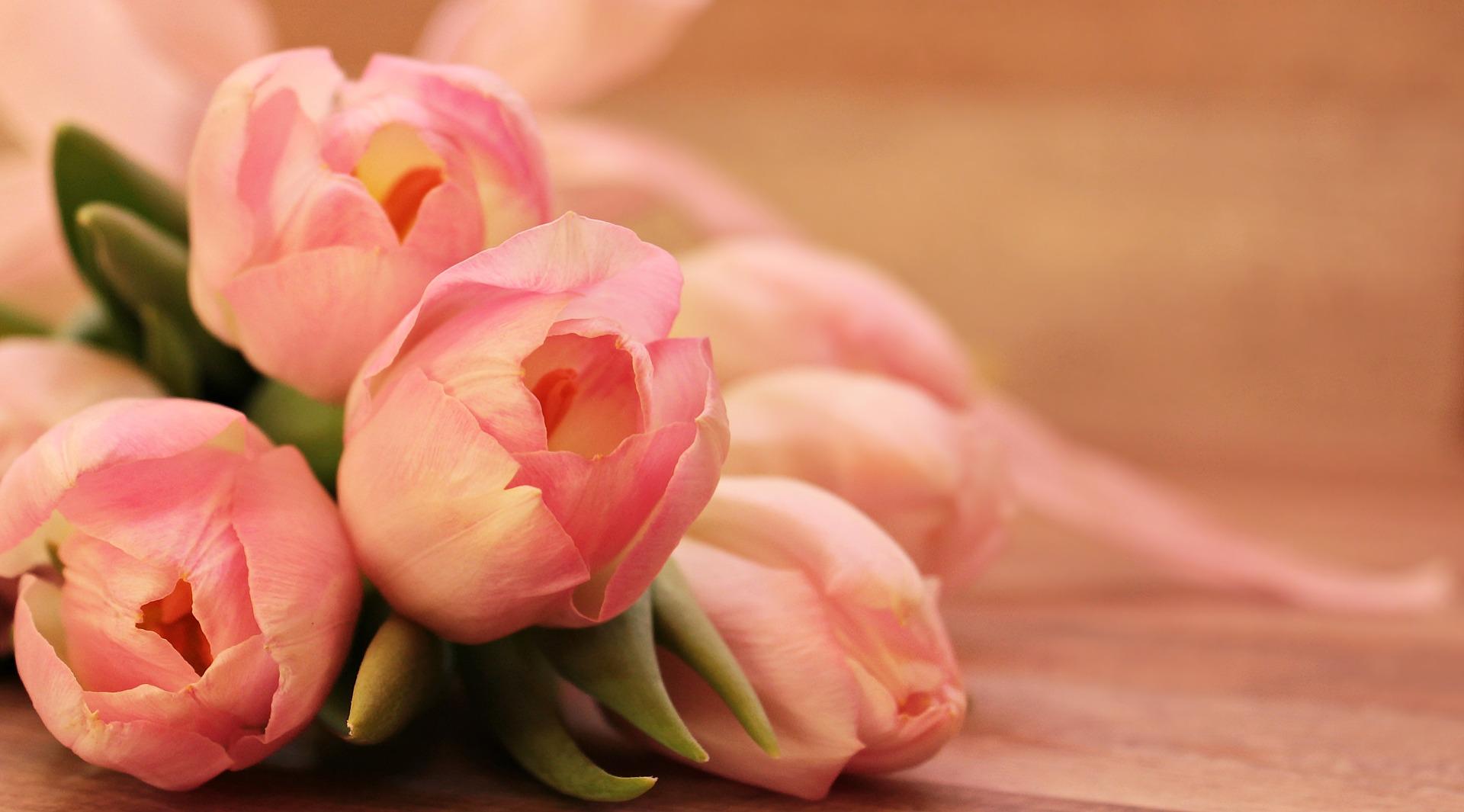 tulips-2068692_1920-7yy7s